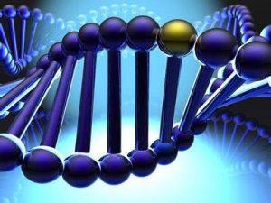 细胞生物高级研究员-深圳