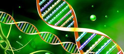 基因检测销售(肿瘤基因北京,广州,上海)