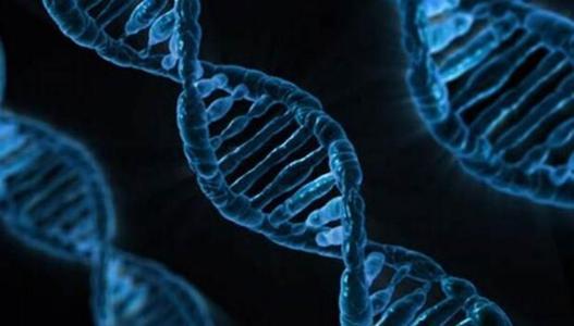 临床项目管理经理(肿瘤基因检测)